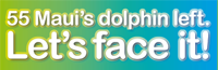 Save the Smallest Dolphin in the World!