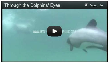 Through the Dolphins' Eyes by Dove Joans