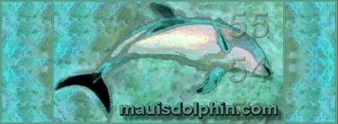 mauisdolphin.com